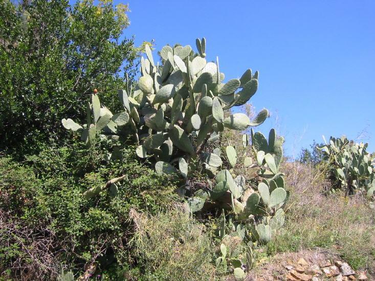 marciana_marina_-_kaktus_lbb.jpg