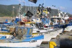marina_di_campo_-_fischerboote_lbb.jpg
